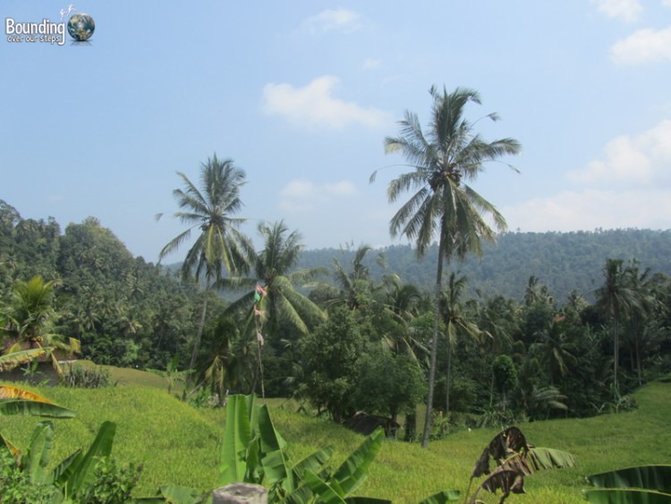 Singaraja to Ubud in a Fruit Truck - Scenery