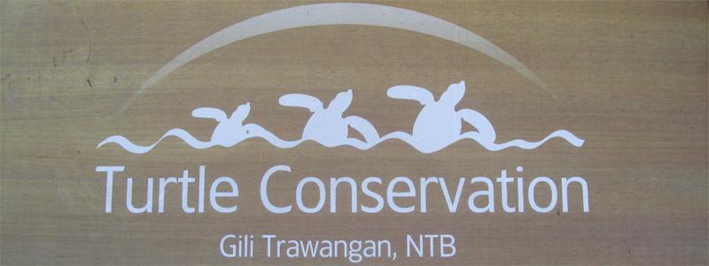 Sea Turtles - Gili Trawangan, Indonesia