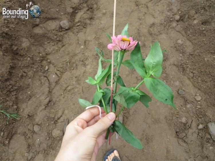 Mae Tee - Buddhist Funeral - Flower