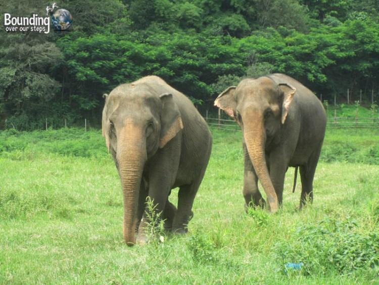 Elephant Lesbians - Tilly and Mae Kham Puan