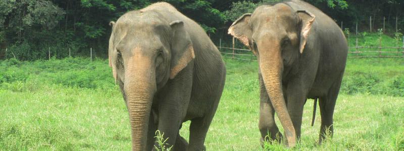 Lesbian elephant