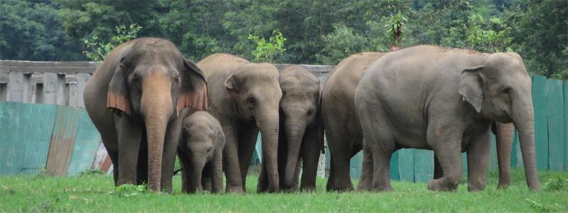 Goodbye to Elephants - Featured
