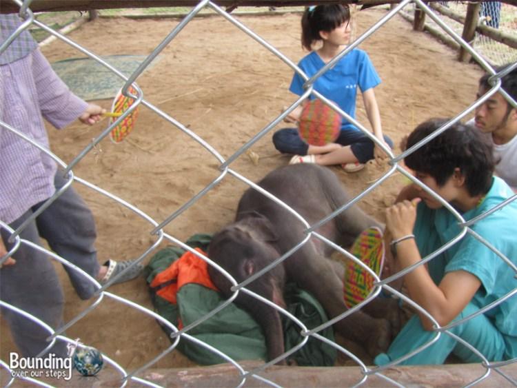 Goodbye to Elephants - Raja Gaja