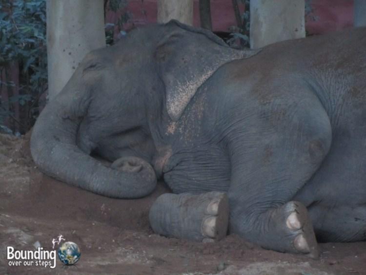 Goodbye to Elephants - Lucky Sleeping