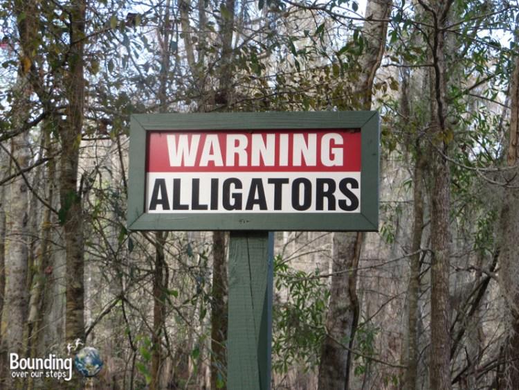 Canoeing Hillsborough River - Alligator Warning