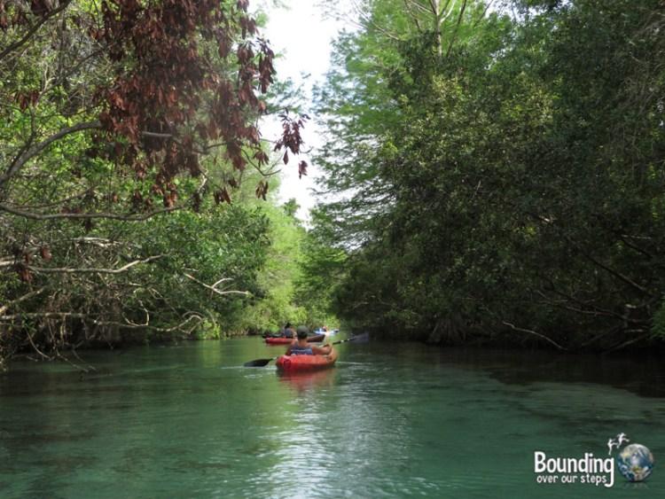 Kayaking Weeki Wachee - Canopy
