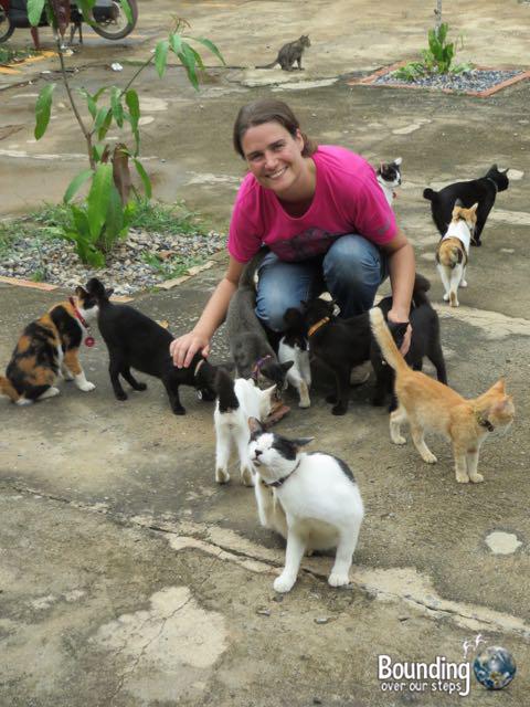 Things to do in Koh Lanta - Kitties