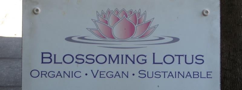 Blossoming Lotus Vegan - Featured