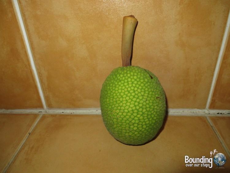 Vegan in Jamaica - Breadfruit from our backyard