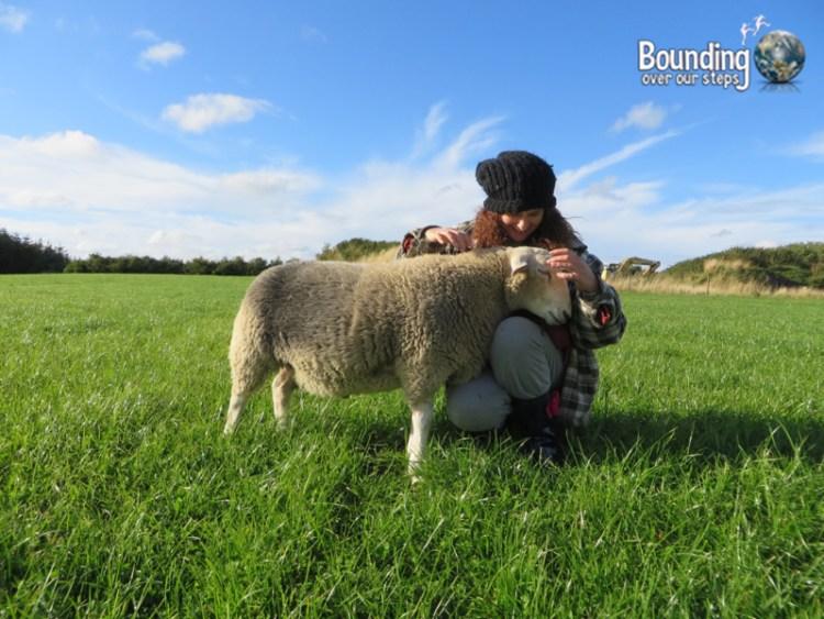 Vegan in Ireland - Eden Farmed Animal Sanctuary