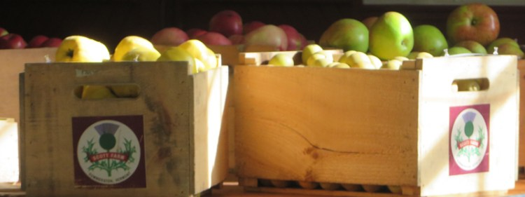 Apple Tasting in Vermont - Featured