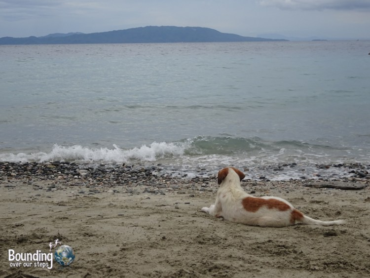 Talipanan Beach - Dog on Beach