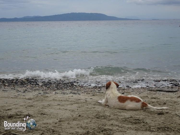 Talipanan Beach - Dog on Beach