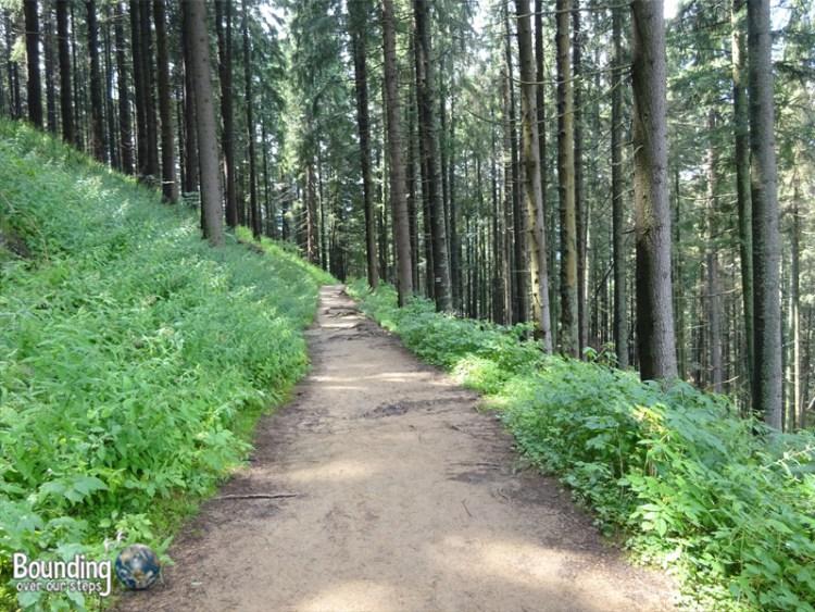 Zakopane - Polish Alps - Fresh Green