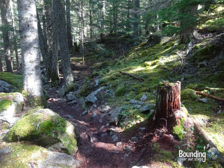 Hiking in Whistler - Emerald Forest