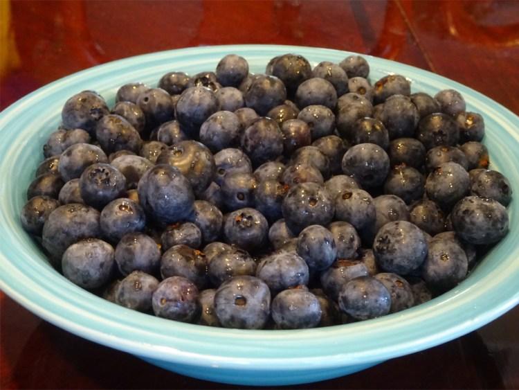 Grammie in Maine - Vegan - Blueberries