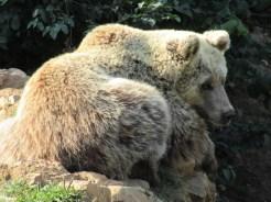 Vegan in Croatia - Kuterovo Bear Rescue - Bear Resting