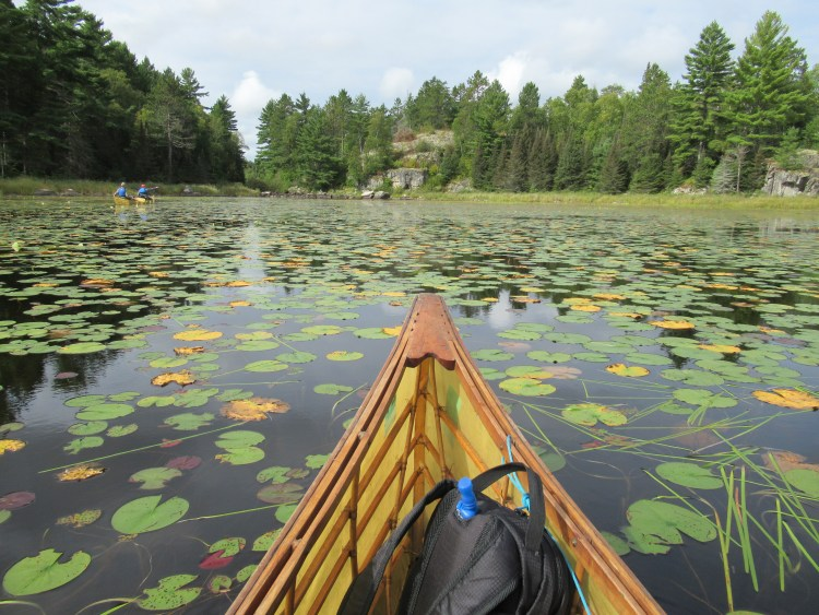 Paddling through lily pads in the Boundary Waters Canoe Area (BWCA)
