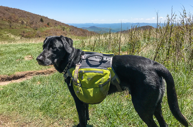 REI dog pack pack. Outdoors gifts