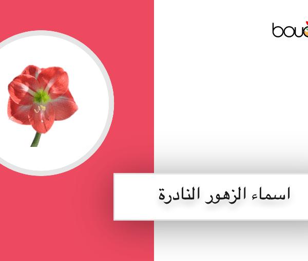 اسماء زهور نادرة بالانجليزي والفرنسية مثل امارلس وزهرة ميدل ميست الحمراء وبوفارديا وغيرهم