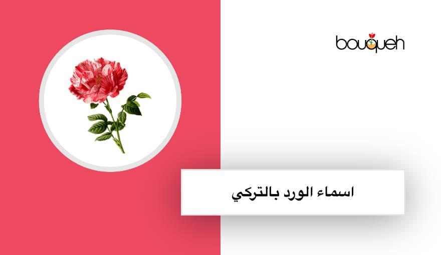 اسماء زهور تركية للبنات
