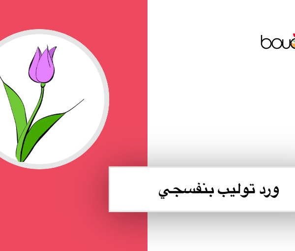 زهرة التوليب تتميز بالونها الشائعة مثلا البنفسجي والازرق والاحمر