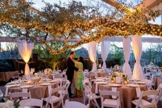 Large trees lit with twinkle lights for tented reception with white flowers and gold tableclothes.