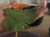 Grape leaf on the palm of a hand