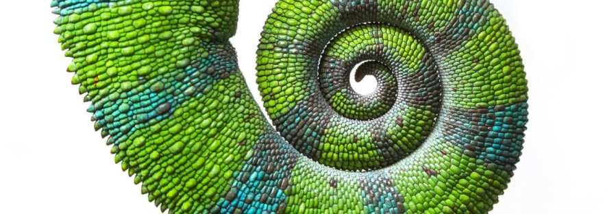 Schwanz eines Chamäleons auf weißem Hintergrund