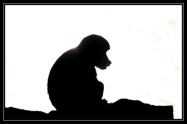 silhouet aap dierenfoto van stax op zoom.nl
