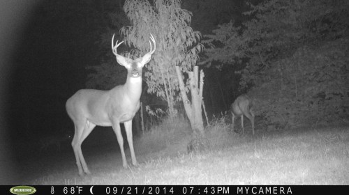 Wide 8 Point 9/21/2014