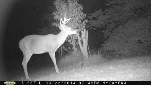 Wide 8 Point 9/22/2014