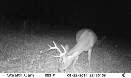 Tall 8 Point 9/22/2014