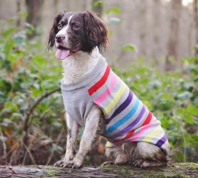 Sotnos Super Stripe sweater