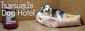 โรงแรมสุนัข Dog Hotel – Dog Day Care
