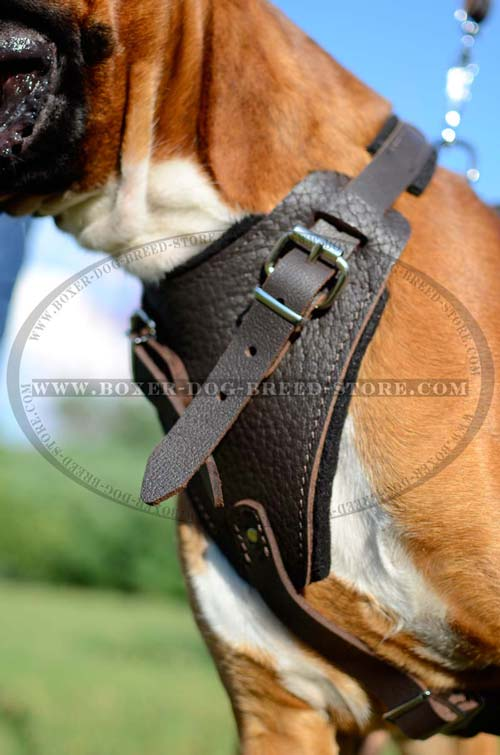 Agitation Leather Dog Harness Perfect For Your