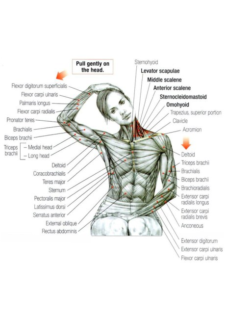 Boxing Workout Ideas - stretches