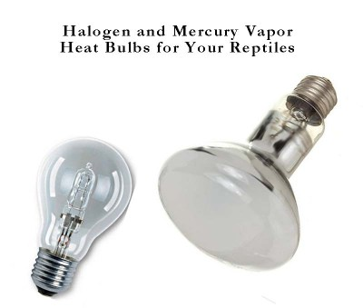 Halogen and Mercury Vapor reptile heat bulbs each have their own advantages and disadvantages.