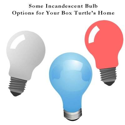 A few incandescent reptile heat bulbs options
