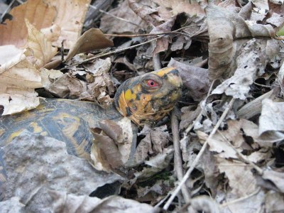 There are some substrates to avoid using in your box turtles' habitat.