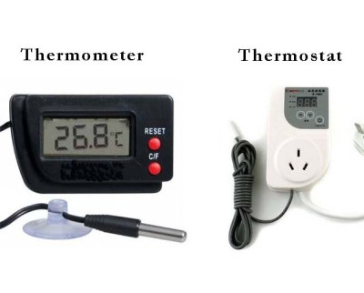 Thermometer and thermostat sound similar, but they have different jobs to do in your box turtle's habitat (and everywhere else you use them!).