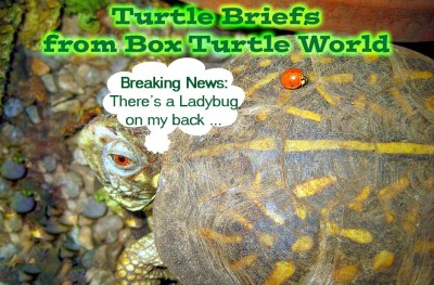Turtle News Briefs