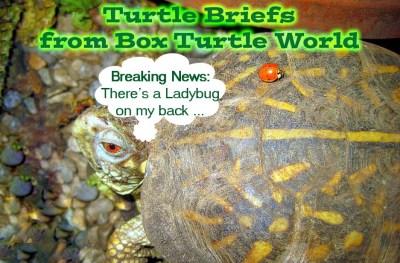 Turtle News Briefs