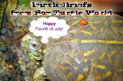 Fourth of July Turtle News Briefs