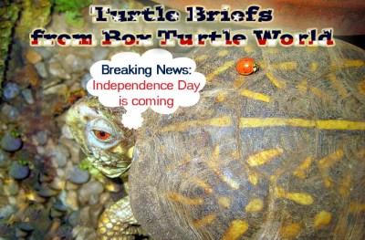 Patriotic Turtle News Briefs
