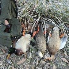 狩猟反省会と来期の展望―2014年度猟期を振り返る