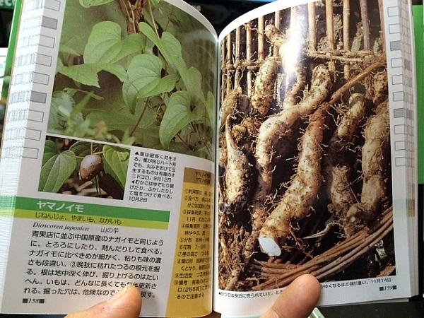 山菜のページ