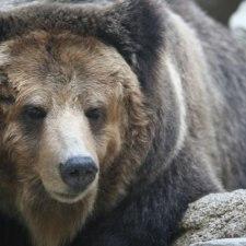 日本史上最悪の獣害「三毛別羆事件」のwikipediaが恐ろしすぎる件