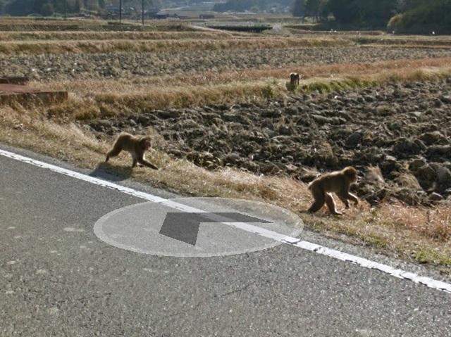 伊賀市の効果的な獣害対策