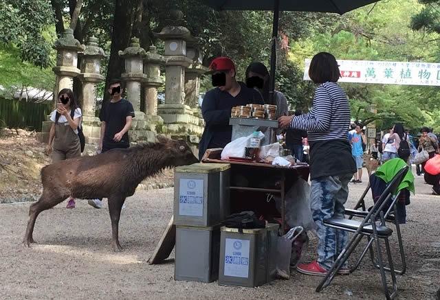 奈良公園でシカ観察